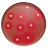 BD BBL Sensi-Disc Antimicrobial Susceptibility Test Discs, BD Diagnostic Systems 231653 Cefaclor