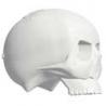 Do All Outdoors Impact Seal Bonehead Skull
